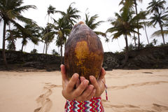 testa della noce di cocco Fotografia Stock