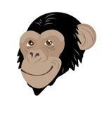 Testa della scimmia Fotografia Stock