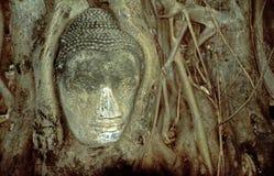 Testa della statua del Buddha Fotografia Stock Libera da Diritti