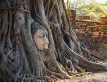 Testa della statua di Buddha nella radice dell'albero Fotografia Stock