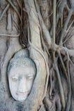 Testa della statua di Buddha nelle radici dell'albero a Ayutthaya, Tailandia Immagini Stock Libere da Diritti