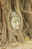 Testa della statua nelle radici dell'albero, Ayutthaya, Tailandia di Buddha Fotografie Stock