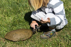 Testa della tartaruga Immagini Stock