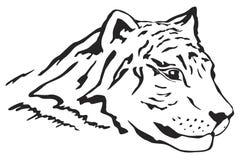 Testa della tigre Immagine Stock