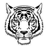 Testa 019 della tigre immagine stock libera da diritti