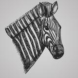Testa della zebra di stile dell'incisione Cavallo africano nello stile di schizzo Illustrazione di vettore Fotografie Stock