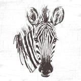 Testa della zebra nella tecnica di incisione Fotografia Stock
