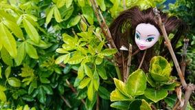 Testa delle bambole nei cespugli verdi della foglia fotografie stock