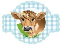 Testa delle mucche Immagine Stock