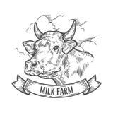 Testa delle mucche Schizzo disegnato a mano in uno stile grafico Illustrazione d'annata dell'incisione di vettore Fotografie Stock