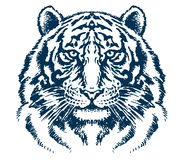 Testa dettagliata della tigre Fotografia Stock