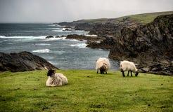 Testa di Achill in contea Mayo sulla costa ovest dell'Irlanda Fotografia Stock Libera da Diritti