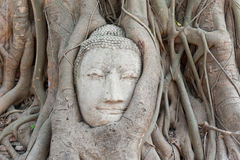 Testa di arenaria Buddha nelle radici dell'albero Immagini Stock Libere da Diritti
