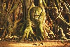 Testa di arenaria Buddha nelle radici dell'albero fotografia stock libera da diritti