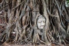 Testa di arenaria Buddha nelle radici dell'albero a Wat Mahathat, Ayutthaya, Tailandia Fotografia Stock Libera da Diritti