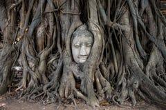 Testa di arenaria Buddha nelle radici dell'albero a Wat Mahathat, Ayutthaya, Tailandia Fotografia Stock