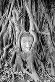 Testa di arenaria Buddha a Wat Mahatat, Ayutthaya Fotografie Stock