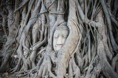Testa di Buddha Immagine Stock Libera da Diritti