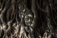 Testa di Buddha Fotografia Stock Libera da Diritti