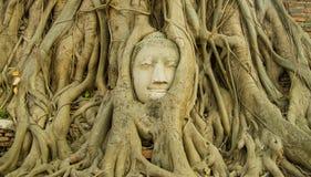 Testa di Buddha in albero dalla parte anteriore Fotografia Stock