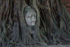 Testa di Buddha all'albero ed Ayutthaya storici Fotografie Stock