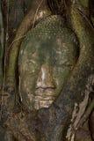 Testa di buddha a Ayutthaya, Tailandia Immagini Stock Libere da Diritti