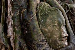 Testa di buddha a Ayutthaya, Tailandia Fotografie Stock Libere da Diritti