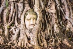 Testa di Buddha di Ayutthaya Fotografie Stock