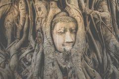 Testa di Buddha embeded nell'albero di banyan Fotografia Stock