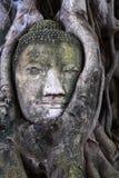 Testa di Buddha nella radice dell'albero Fotografia Stock Libera da Diritti