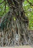 Testa di Buddha in un circuito di collegamento di albero immagini stock