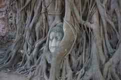 Testa di Buddha in una radice dell'albero Fotografia Stock