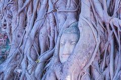 Testa di Buddha, Wat Mahathat Ayutthaya, Tailandia Fotografia Stock Libera da Diritti