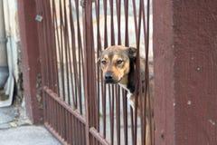 Testa di cane Fotografia Stock Libera da Diritti