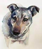 Testa di cane in acquerello fotografia stock