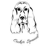 Testa di cane cocker spaniel Immagini Stock