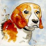 Testa di cane del cane da lepre che waterpainting immagini stock