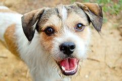 Testa di cane del primo piano Fotografie Stock
