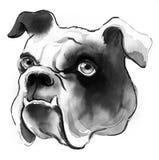 Testa di cane del toro Immagine Stock