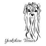 Testa di cane dell'Yorkshire terrier Fotografie Stock Libere da Diritti