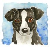 Testa di cane nera che waterpainting fotografia stock