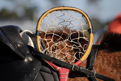Testa di Cane Polocrosse Racquet Immagine Stock Libera da Diritti