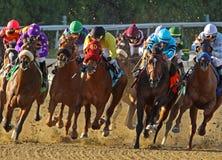 Testa di cavalli del Thoroughbred giù il Homestretch Fotografia Stock Libera da Diritti