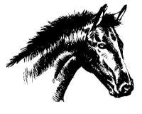 Testa di cavallo Immagini Stock Libere da Diritti