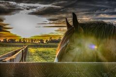 Testa di cavallo che guarda dietro una ferrovia di recinto con la pubblicazione del tipo di Instagram fotografia stock libera da diritti