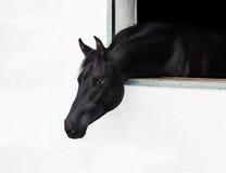Testa di cavallo che guarda fuori la finestra. Fotografie Stock Libere da Diritti