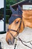 Testa di cavallo con la maschera fotografia stock libera da diritti
