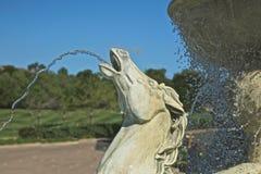 Testa di cavallo della fontana Immagine Stock