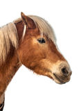 Testa di cavallo di Brown con il percorso di ritaglio Fotografia Stock