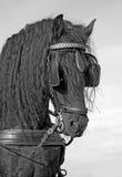 Testa di cavallo di Frisian Immagini Stock